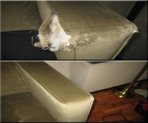 couch protection